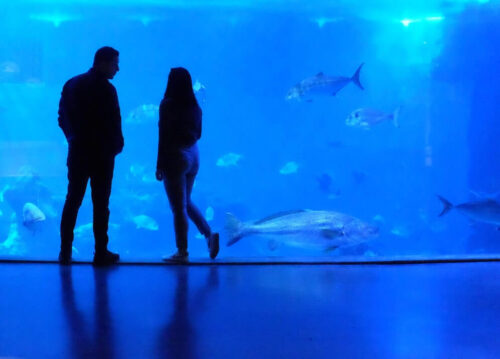 水族館デート中のカップル