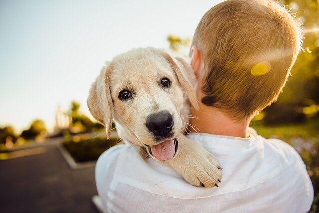 少年が犬を抱いている画像